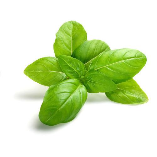 Fresh Basil Leaf 100G